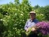На заготовке лекарственных растений. Цветёт коронария-горицвет кукушкин. Май 2012 года.